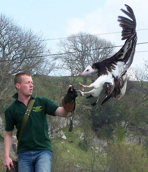 Wakefield MAG Dales Falconry Centre Rideout
